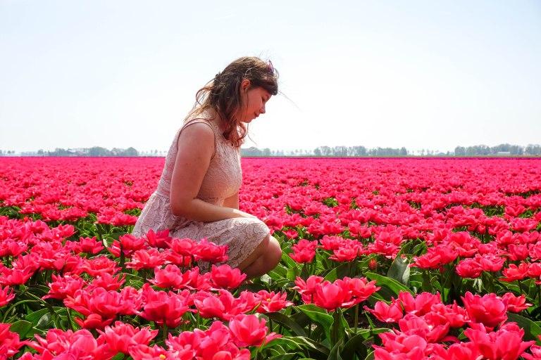 beautiful girl in dress in a field of pink flowers