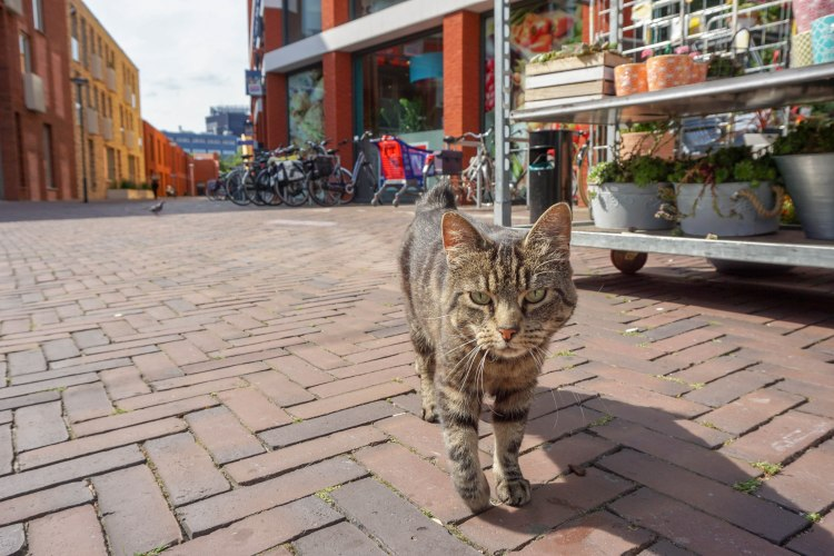 Cat in Zwolle, Netherlands