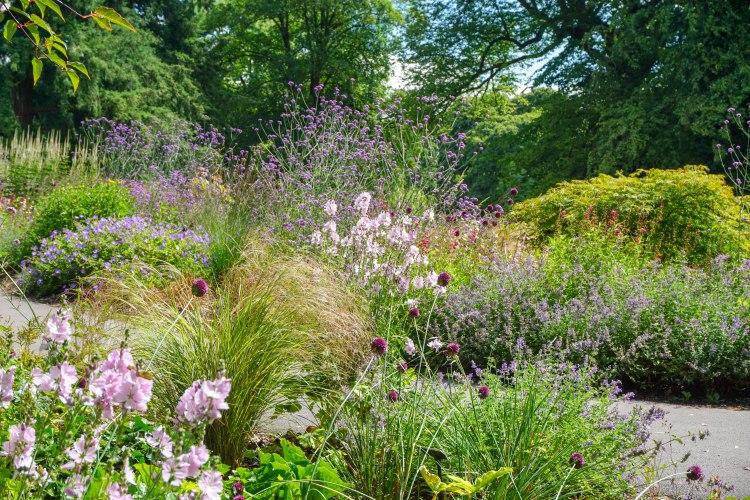 pastel pink flowers in blarney castle garden