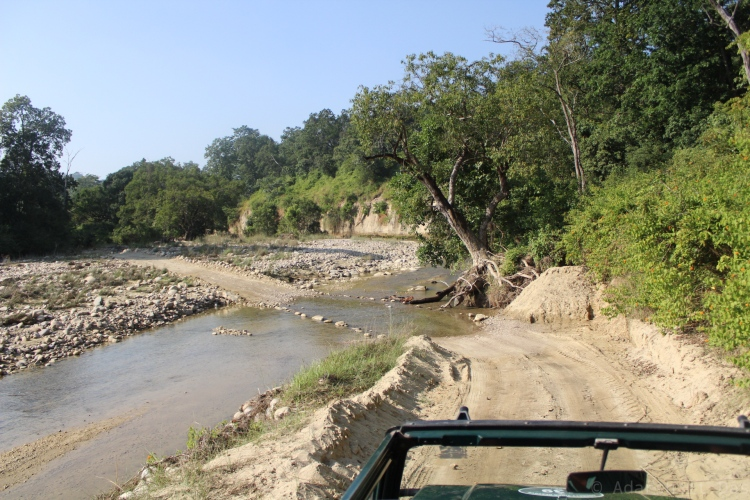 ideal tiger habitat consisting of dense foliage with a clearing and a stream