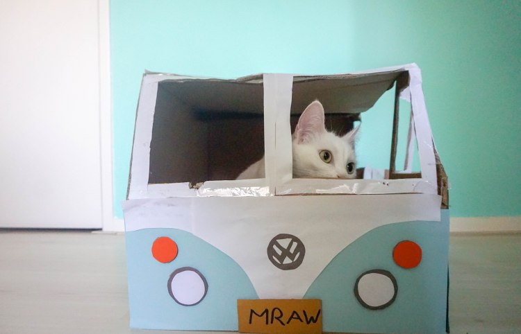 A white cat is sitting in a self-made cat castle, looking like a Volkswagen